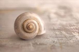 snail-4300222_1920_edited.jpg