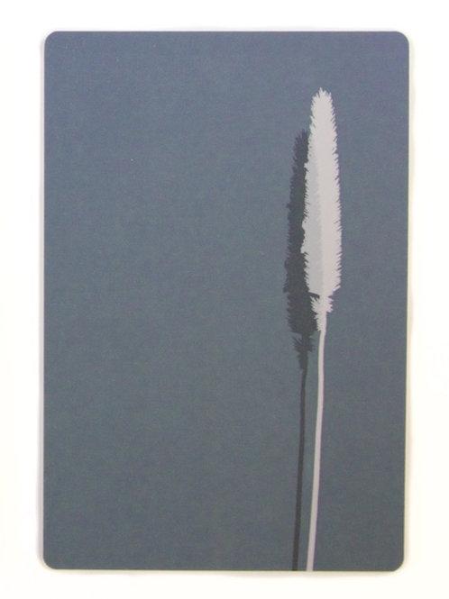 Phleum Alpinum breadboard 18x12