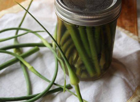 Pickling Garlic Scapes