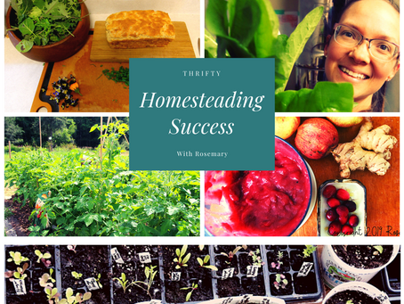 Thrifty Homesteading Success