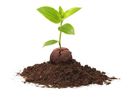 Guerilla Gardening - Seedbombs