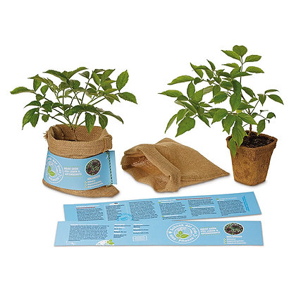 Schenk der Erde eine Pflanze