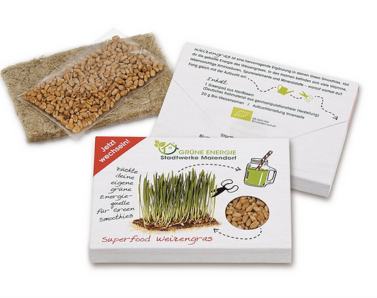 Superfood Weizengras Saatset