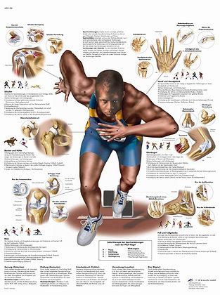 Anatomische Bilder