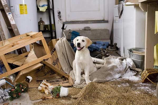 Bilan comportemental canin