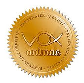 Vox Animae Formation