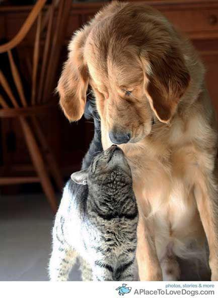 Bilan cohabitation animale