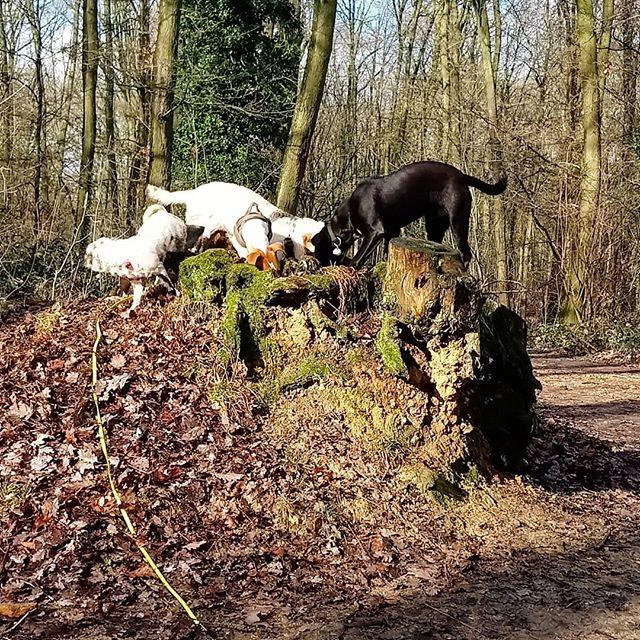 Promenade collective en forêt