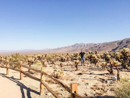 Joshua Tree - všude samej kaktus