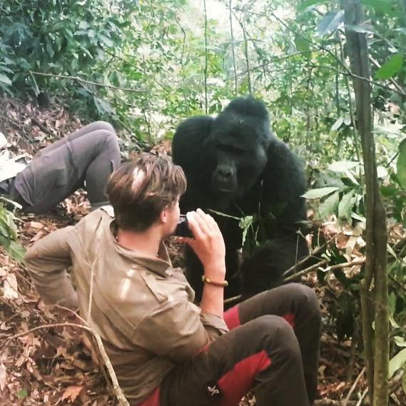 Gorillas, border to Kongo