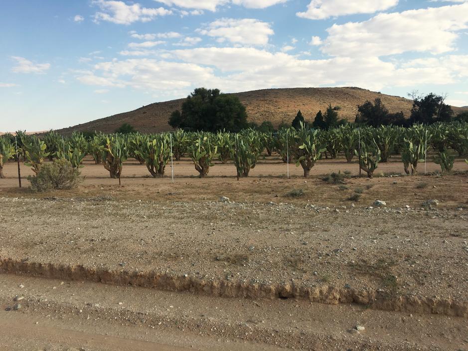3 days of dry landscape