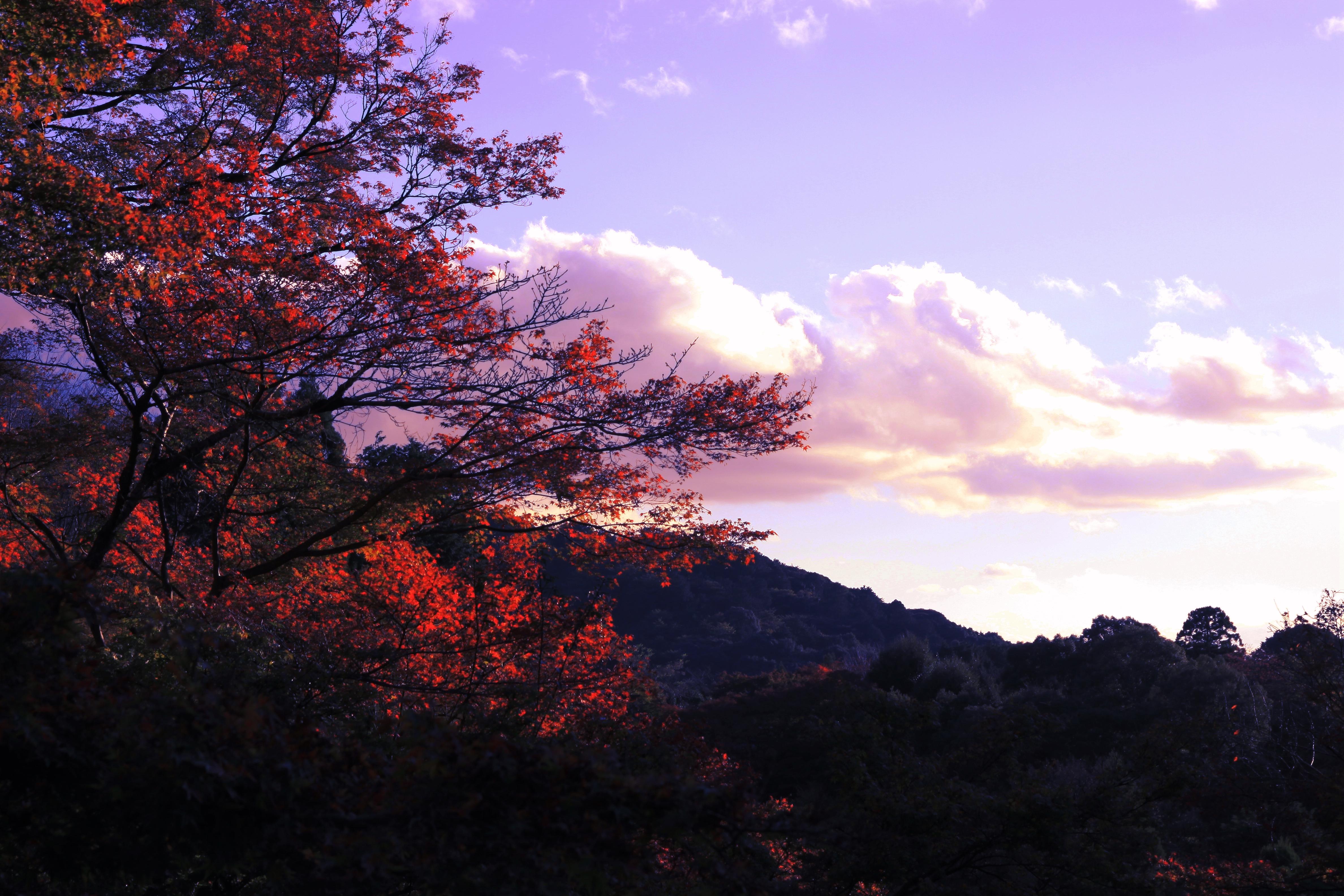 IMG_8693_副本