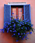 blue flowers window box.jpg