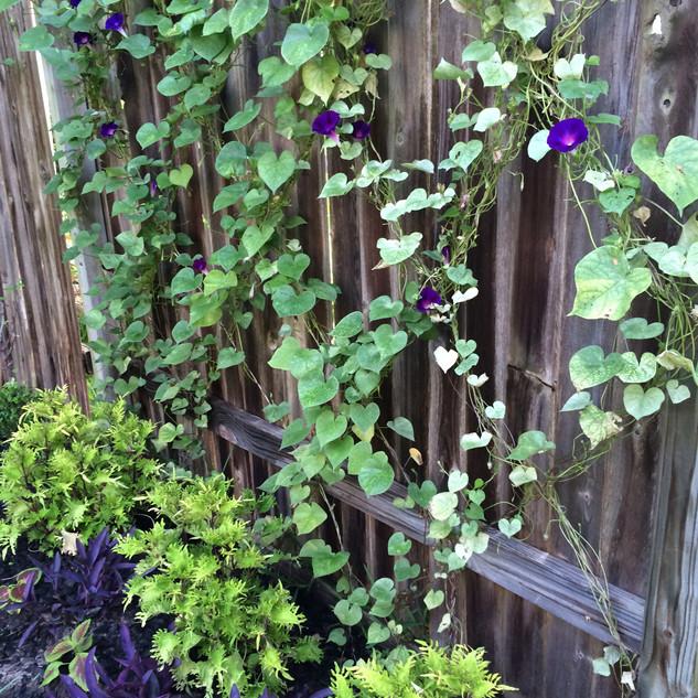 Close-Up of Interum Garden