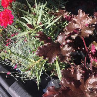 Plant choices