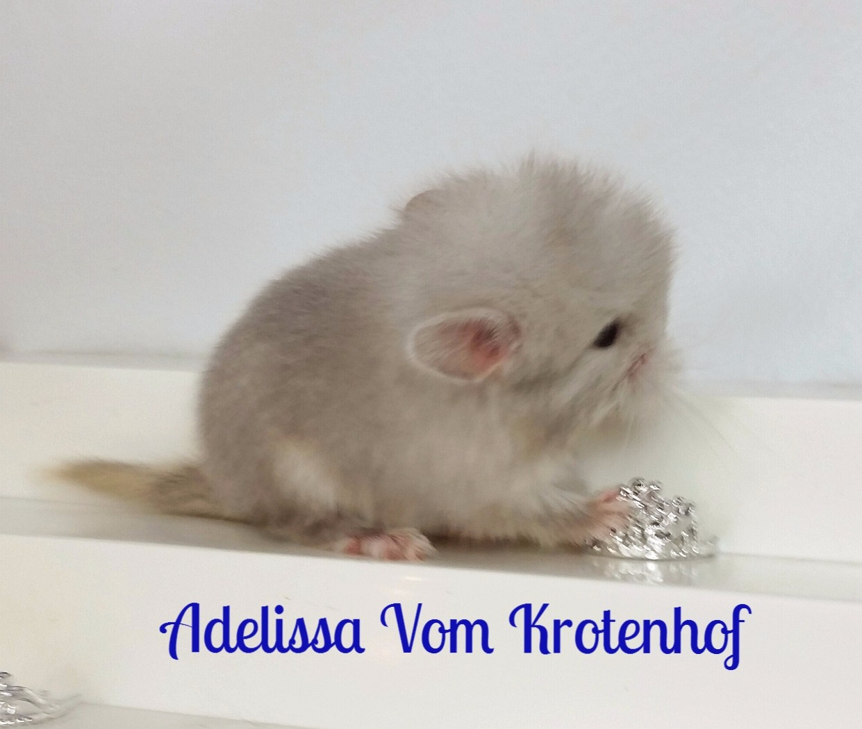 Princess Adelissa