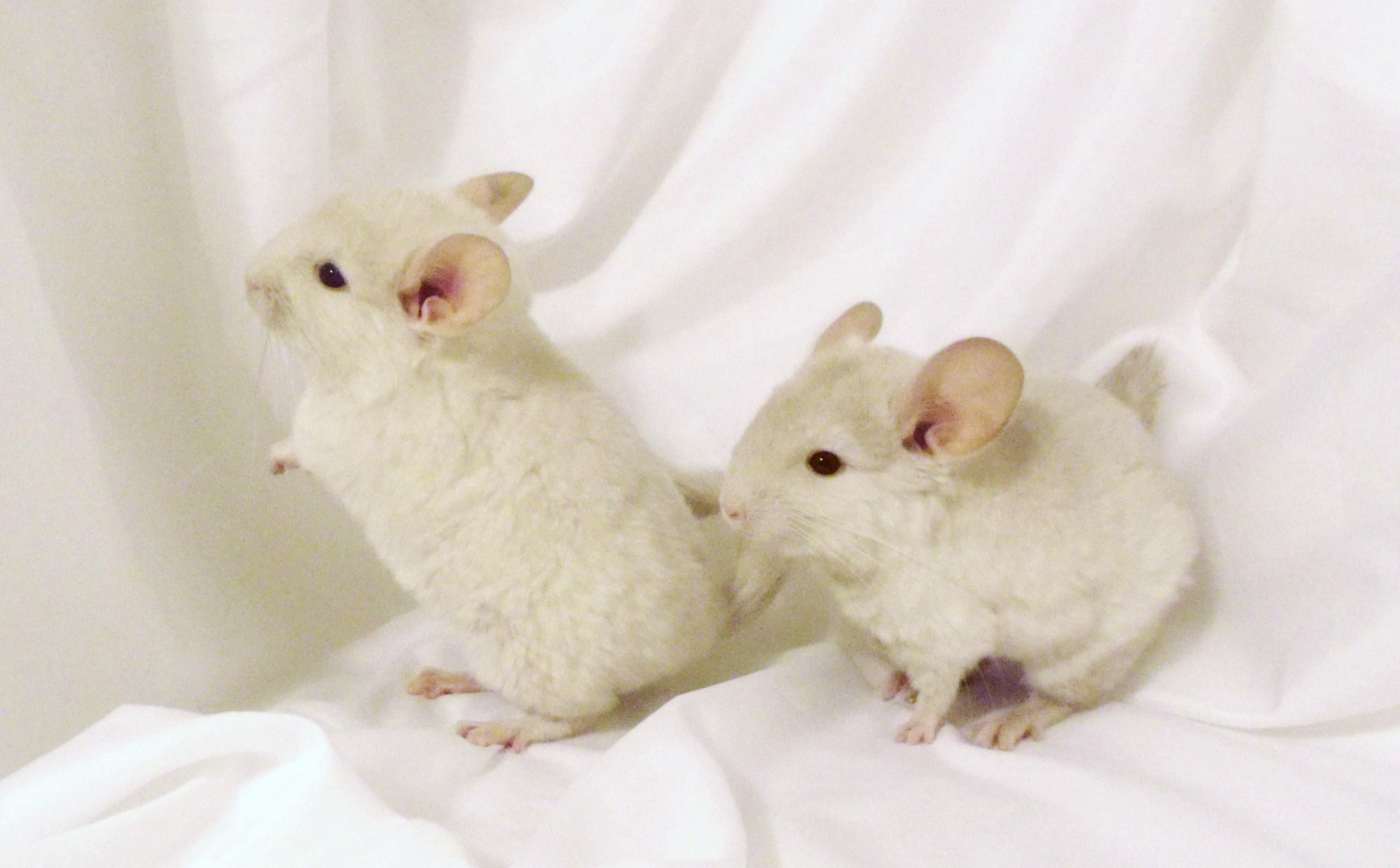 white kits