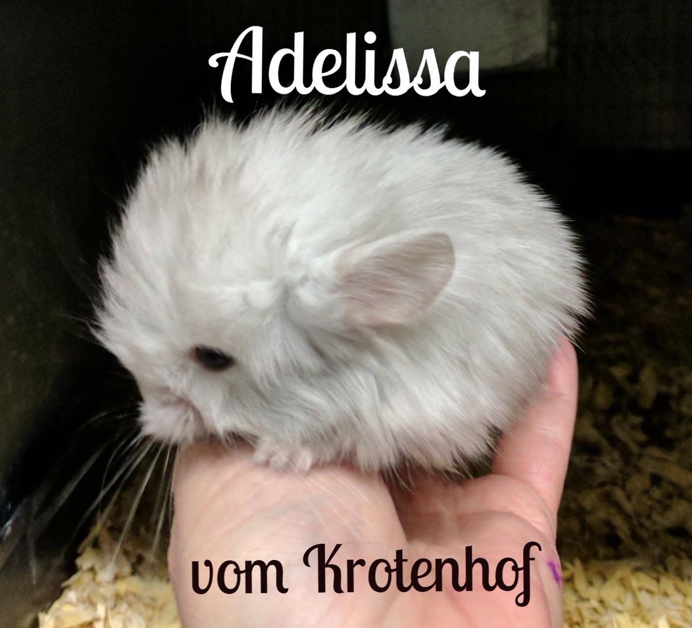 Adelissa