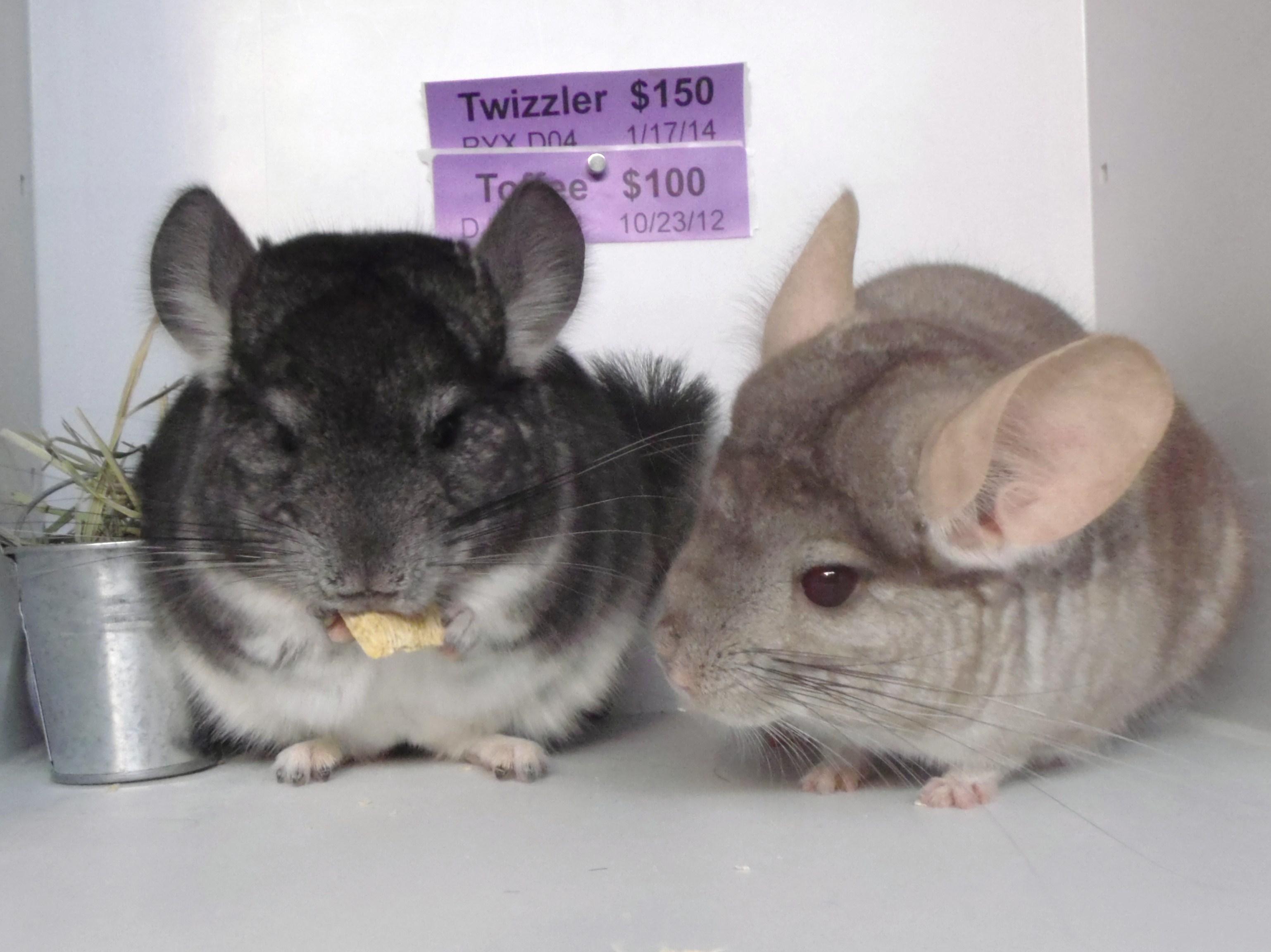 Twizzler & Toffee