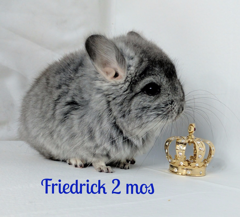 Friedrick 2 months