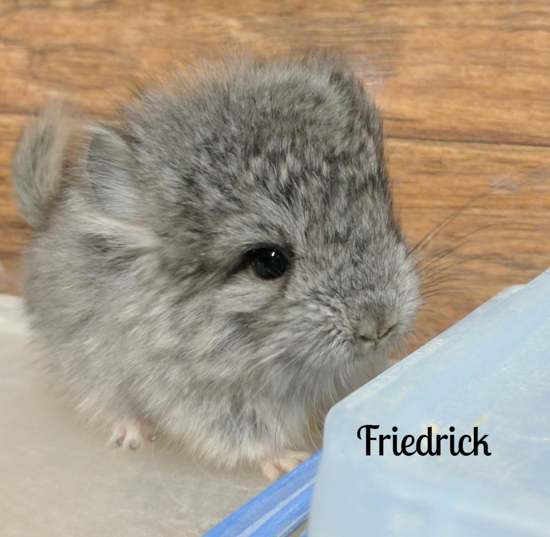 Friedrick
