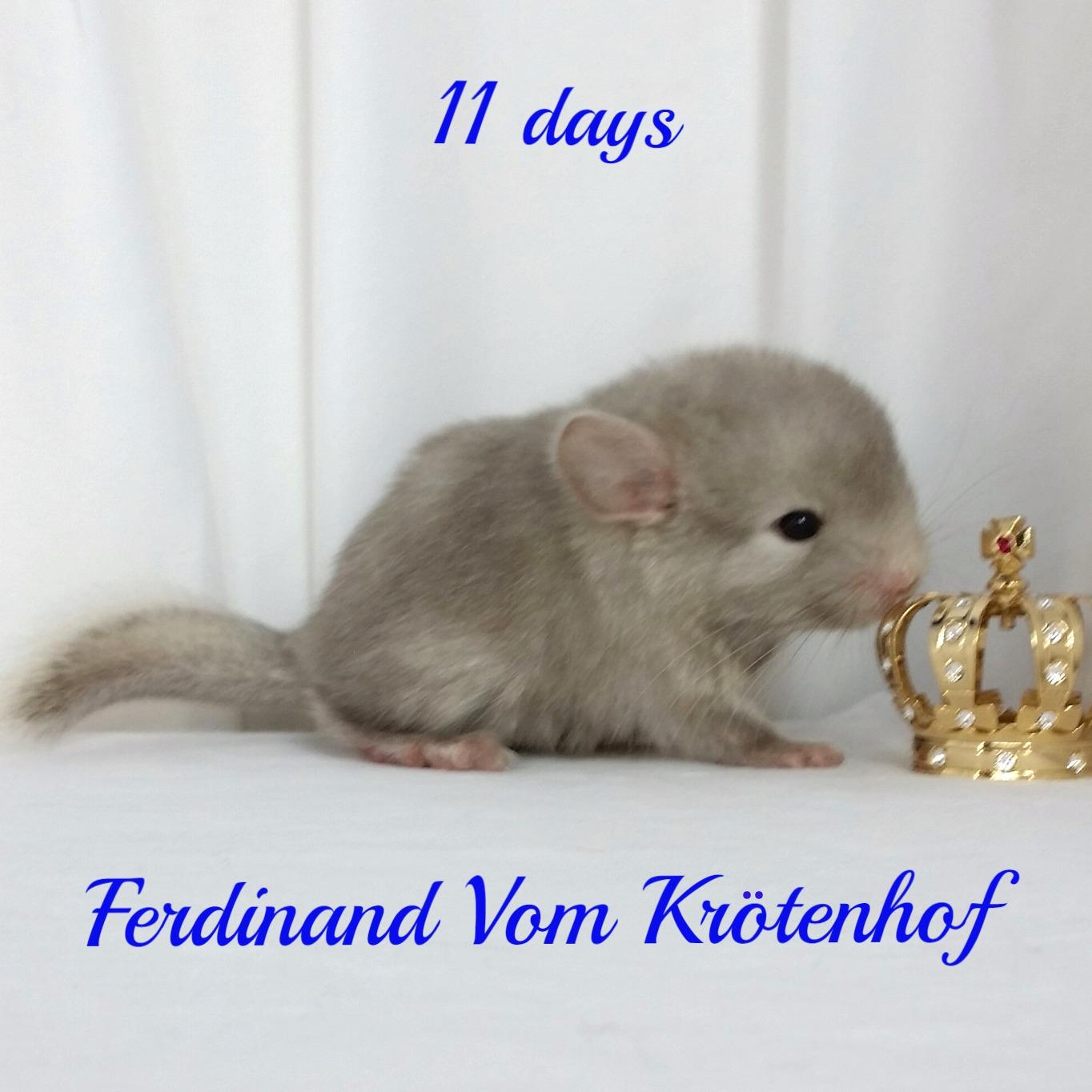 Ferdinand Vom Krotenhof
