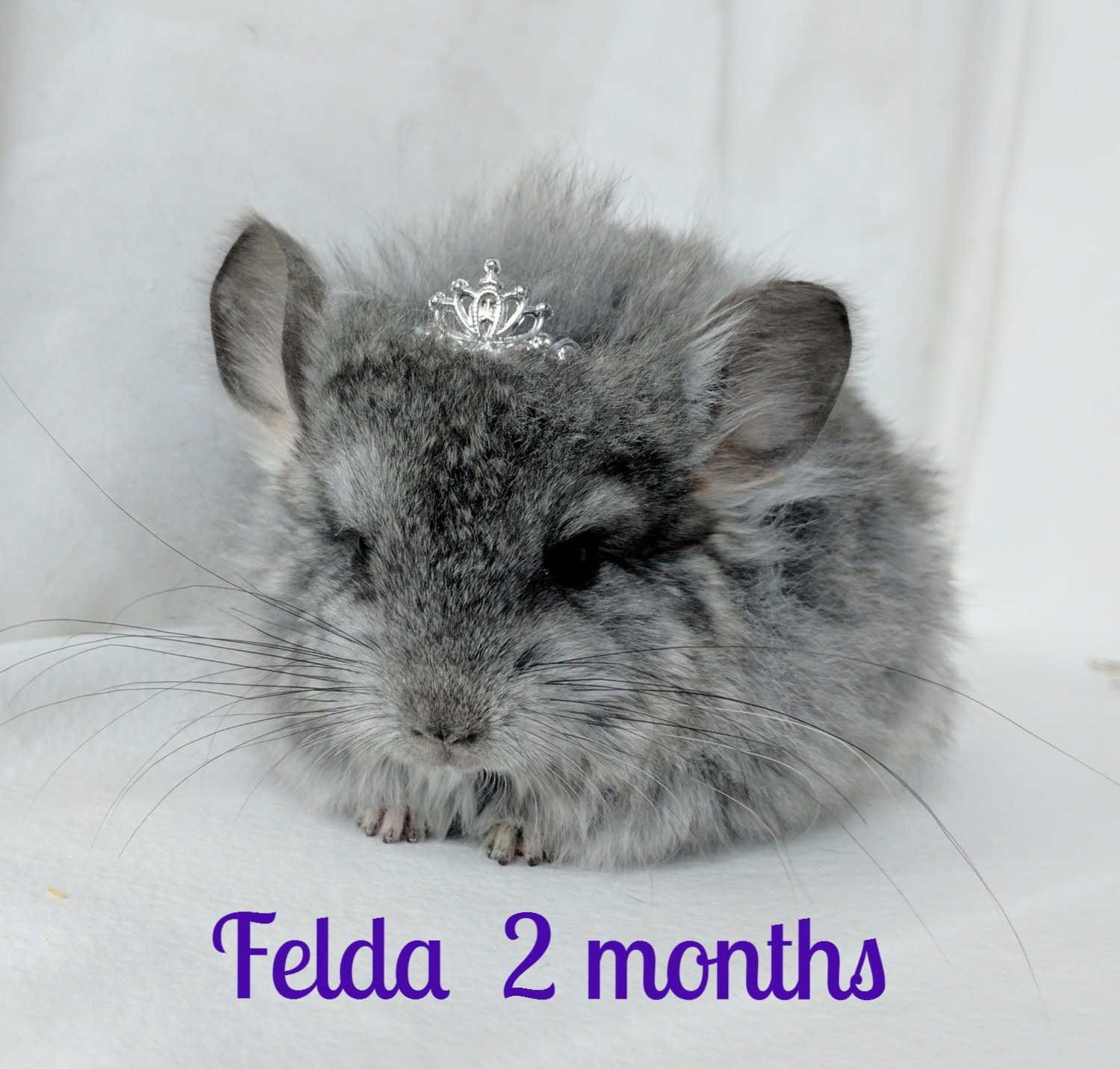 Felda at two months