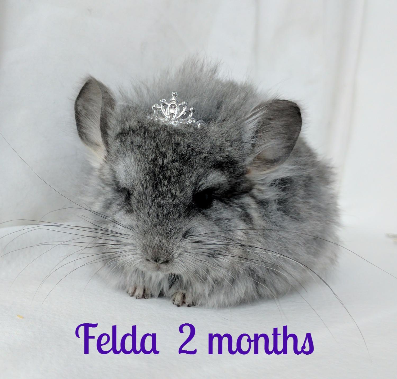 Felda at two months