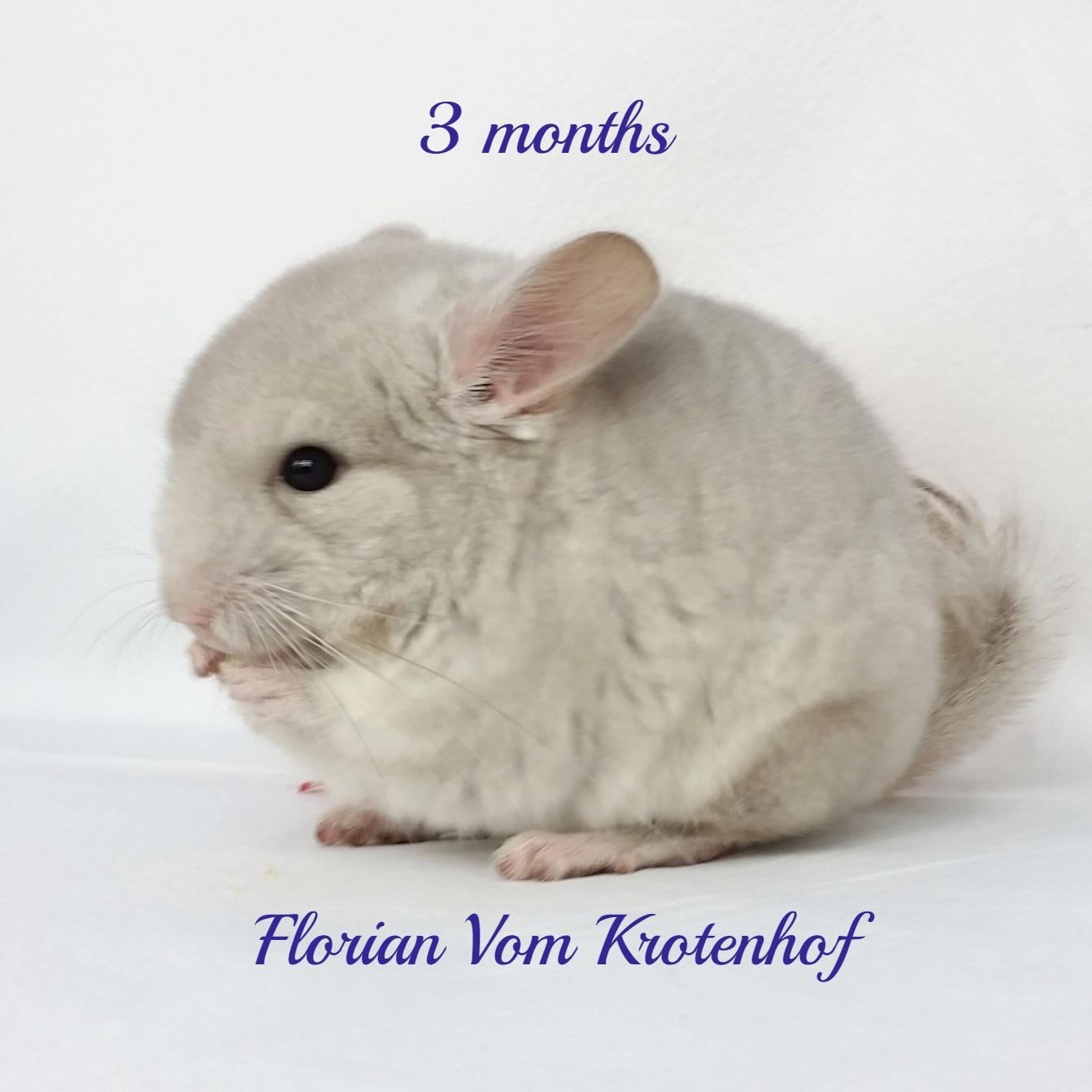 Florian 3 months