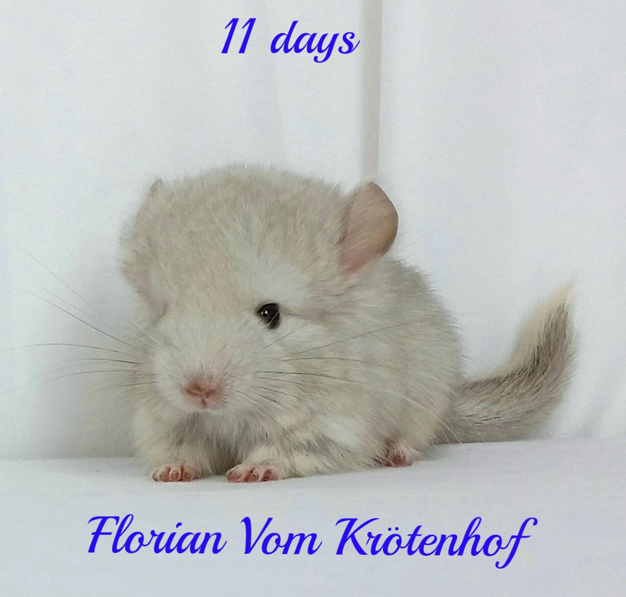 Florian 11 days