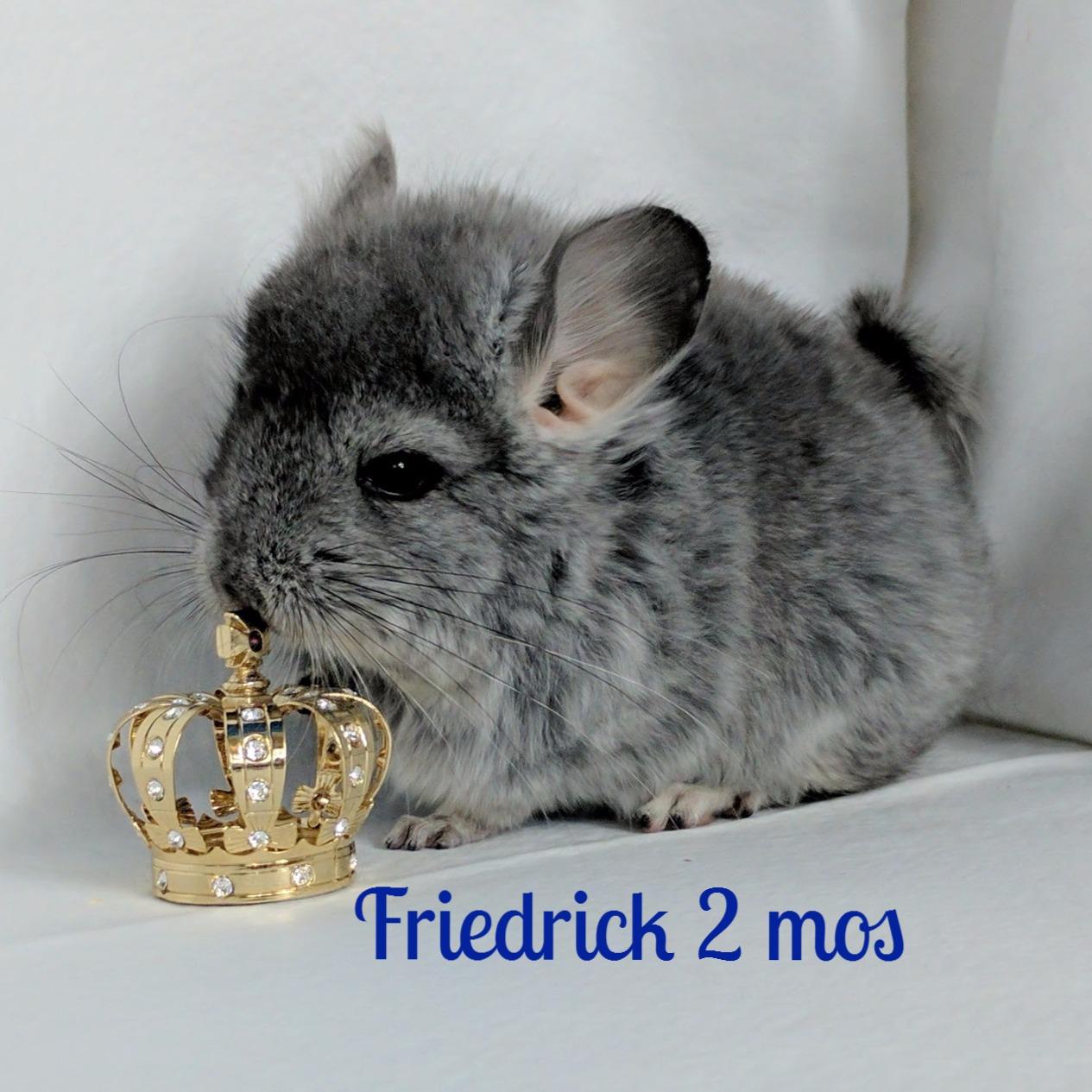 Friedrick 2 mos
