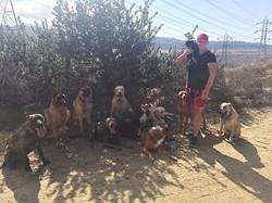 Pack Runs and dog training