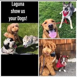 The Pack Runs in Laguna