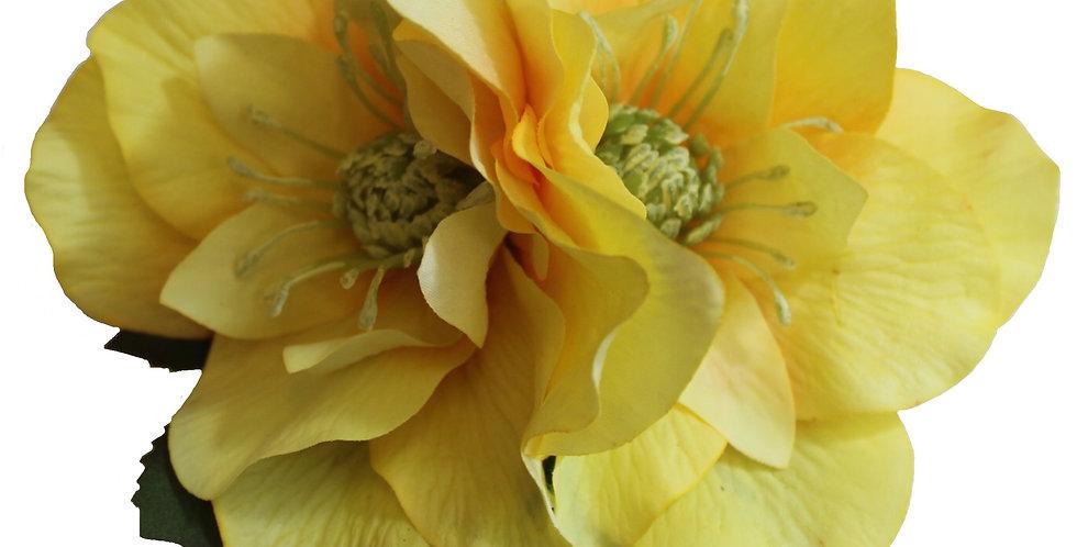 BRIGITTE Double Yellow Hellebore