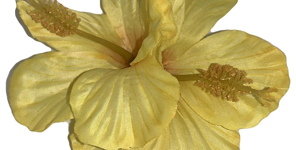 DEBBIE Double Hibiscus  -Yellow