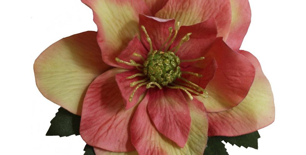 BRIGITTE Single Pink Hellebore