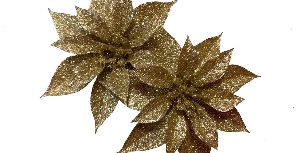 Gold Double Poinsettia