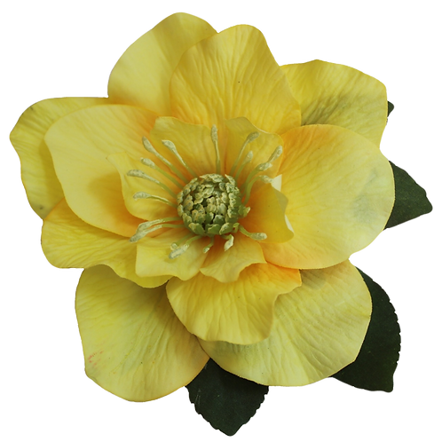 BRIGITTE Single Yellow Hellebore