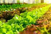 Farm software