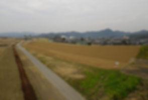 川崎堤防_edited.jpg