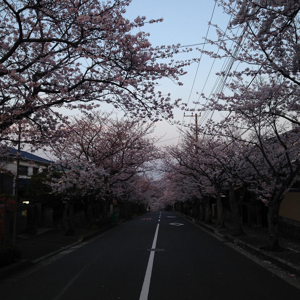 2015-03-31 17.59.49.jpg