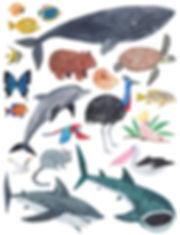 Australian Animals.jpg