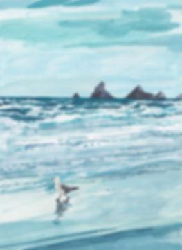 Seagull Reflections_sml.jpg