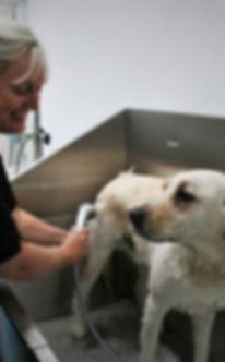lancaster dog groomer