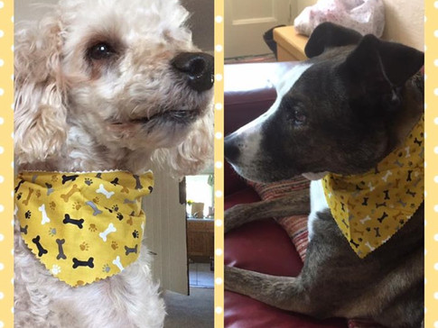 Matching bandanas Lune Dog Grooming