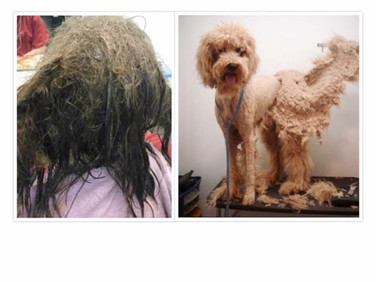brush hair every day Lune Dog Grooming