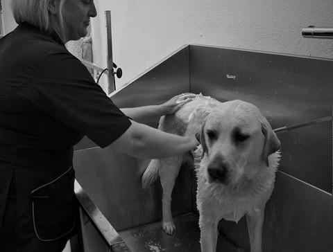 Lune Dog Grooming