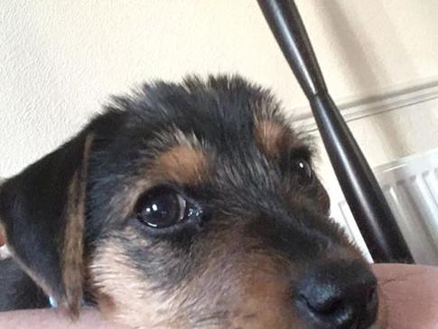 Mabel's first Selfie! 🐶❤️Lune Dog Grooming