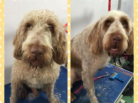 Boris Lune Dog Grooming