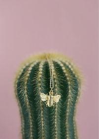 timi_cactus.jpg